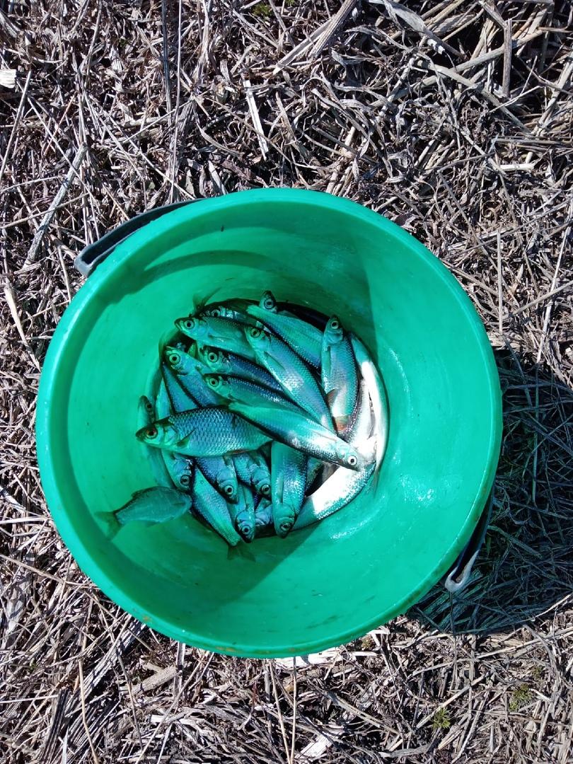 Отчет о рыбалке: Река Неручь — Свердловский район — Центральный федеральный округ, Орловская область