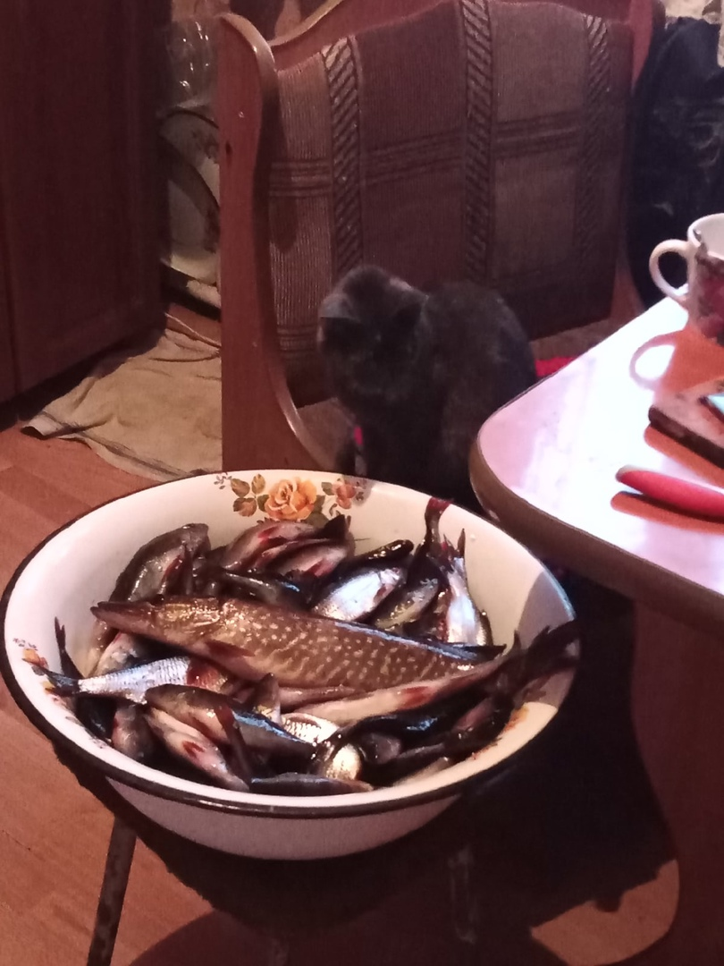 Отчет о рыбалке: озеро Глубокое — Малиновараккское сельское поселение — Северо-Западный федеральный округ, Республика Карелия