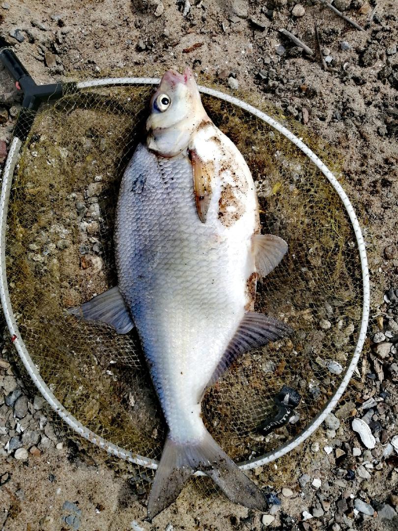 Отчет о рыбалке: Река Ока — городской округ Коломна — Коломна — Центральный федеральный округ, Московская область