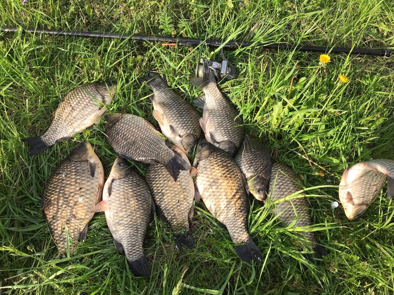 Отчет о рыбалке: Куначевский пруд — Глазуновский район — Центральный федеральный округ, Орловская область
