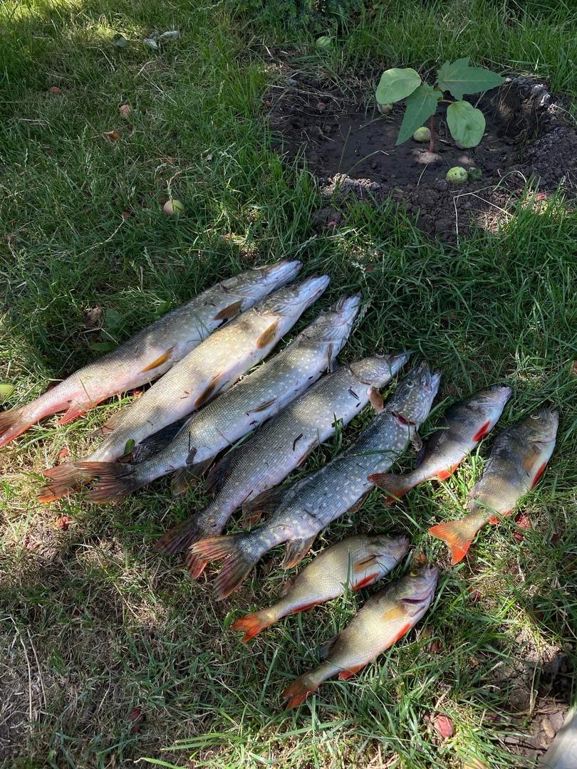 Отчет о рыбалке: озеро Старый Сок — Красноярский район — Приволжский федеральный округ, Самарская область