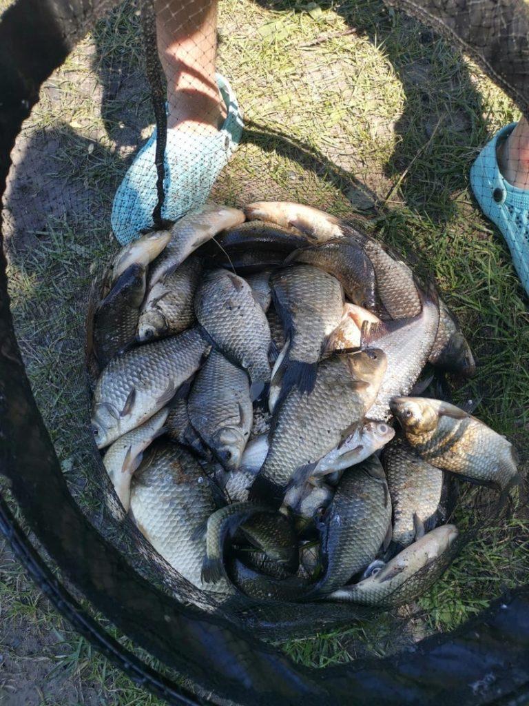 Отчет о рыбалке: Река Пахра — Раменский городской округ — Центральный федеральный округ, Московская область