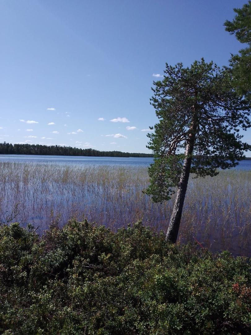 Отчет о рыбалке: Озеро Виксозеро — Куземское сельское поселение — Северо-Западный федеральный округ, Республика Карелия