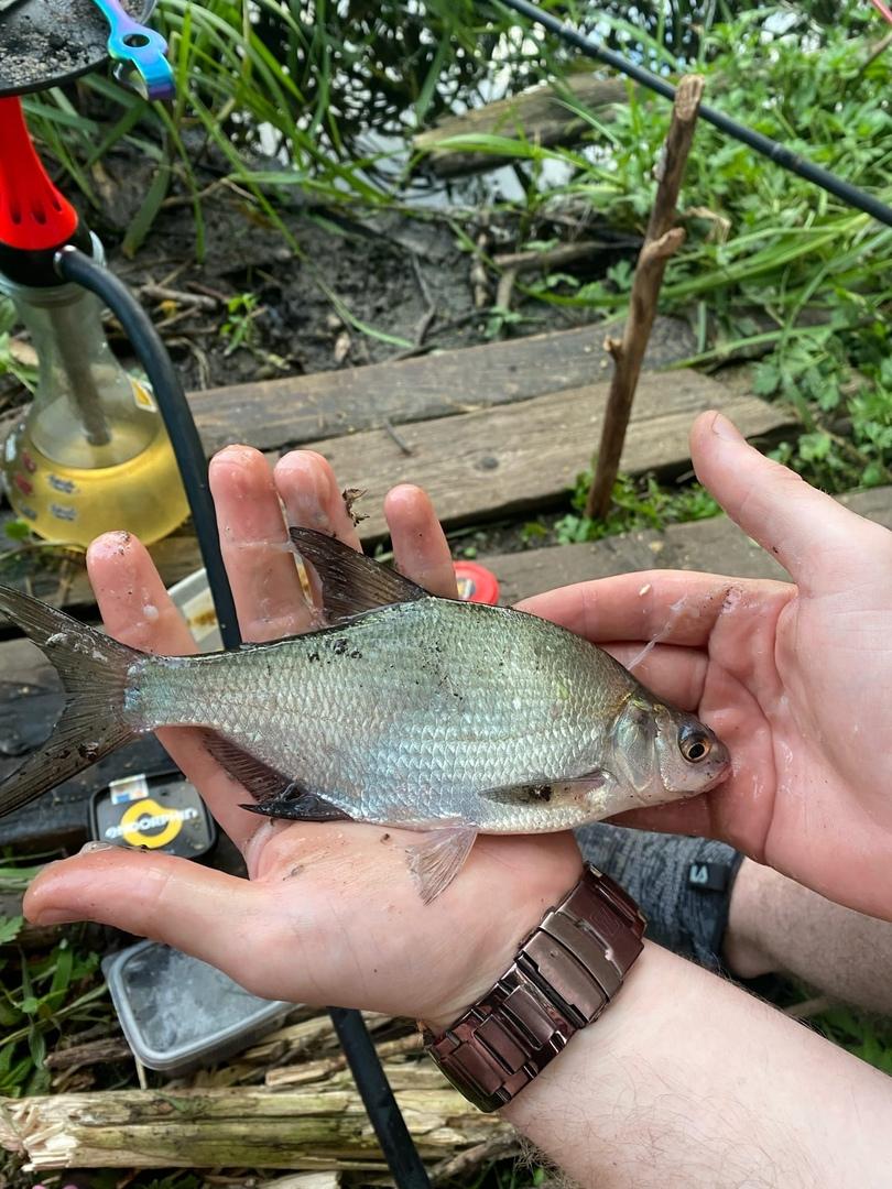 Отчет о рыбалке: Река Ока — Орловский муниципальный округ — Центральный федеральный округ, Орловская область