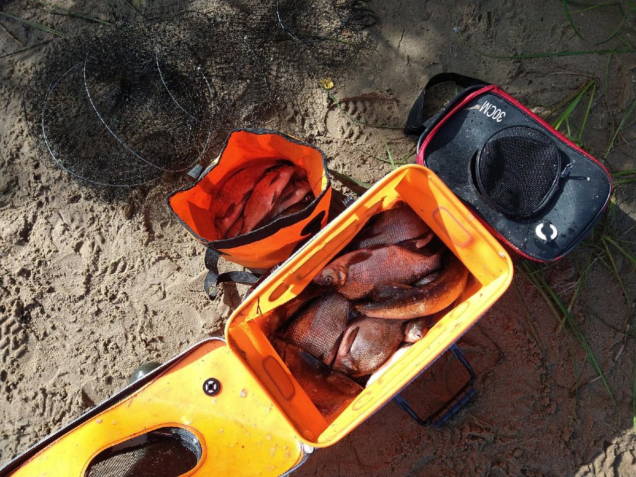Отчет о рыбалке: Река Шуя — Эссойльское сельское поселение — Северо-Западный федеральный округ, Республика Карелия