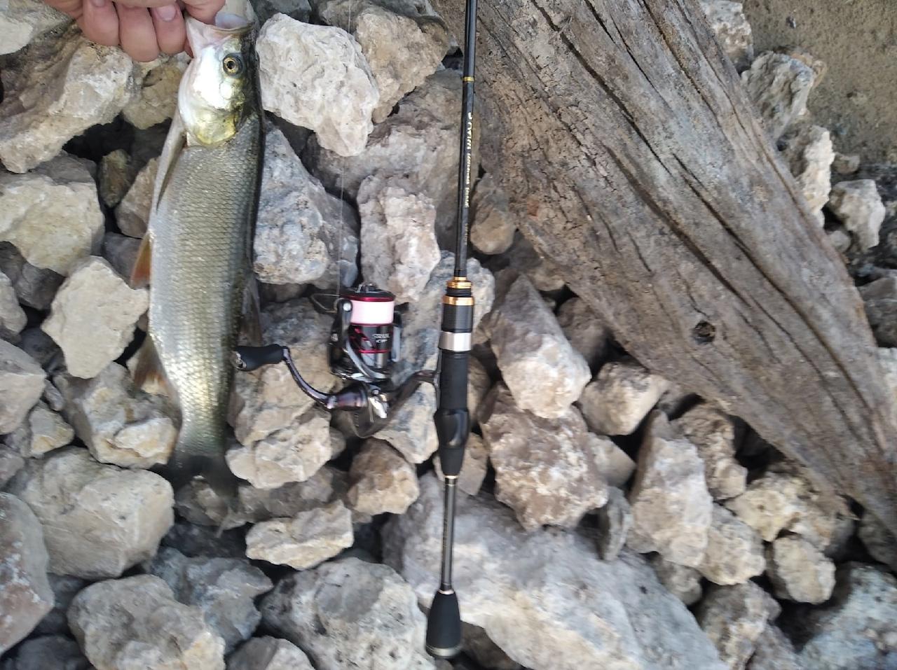 Отчет о рыбалке: Река Быстрая Сосна — городской округ Елец — Елец — Центральный федеральный округ, Липецкая область