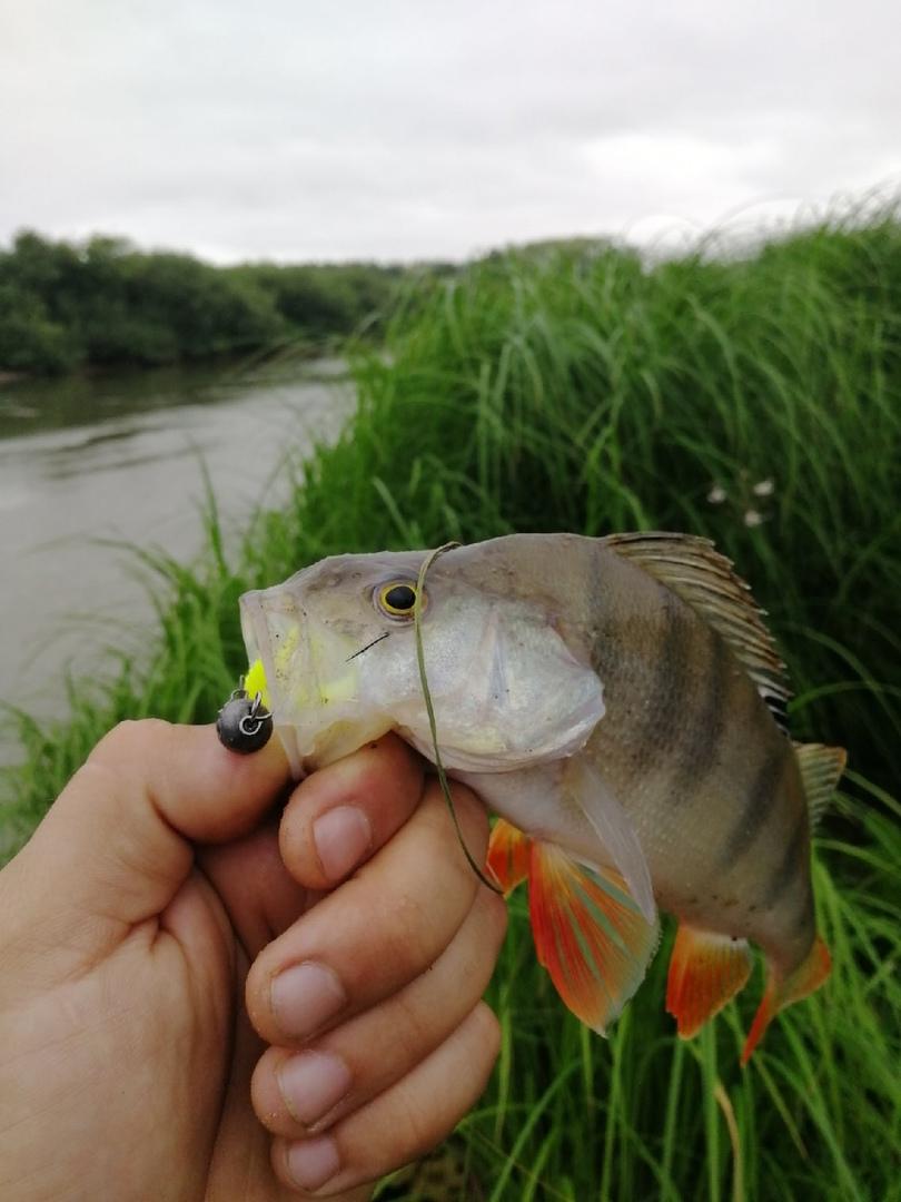 Отчет о рыбалке: Река Ишим — городской округ Ишим — Ишим — Уральский федеральный округ, Тюменская область