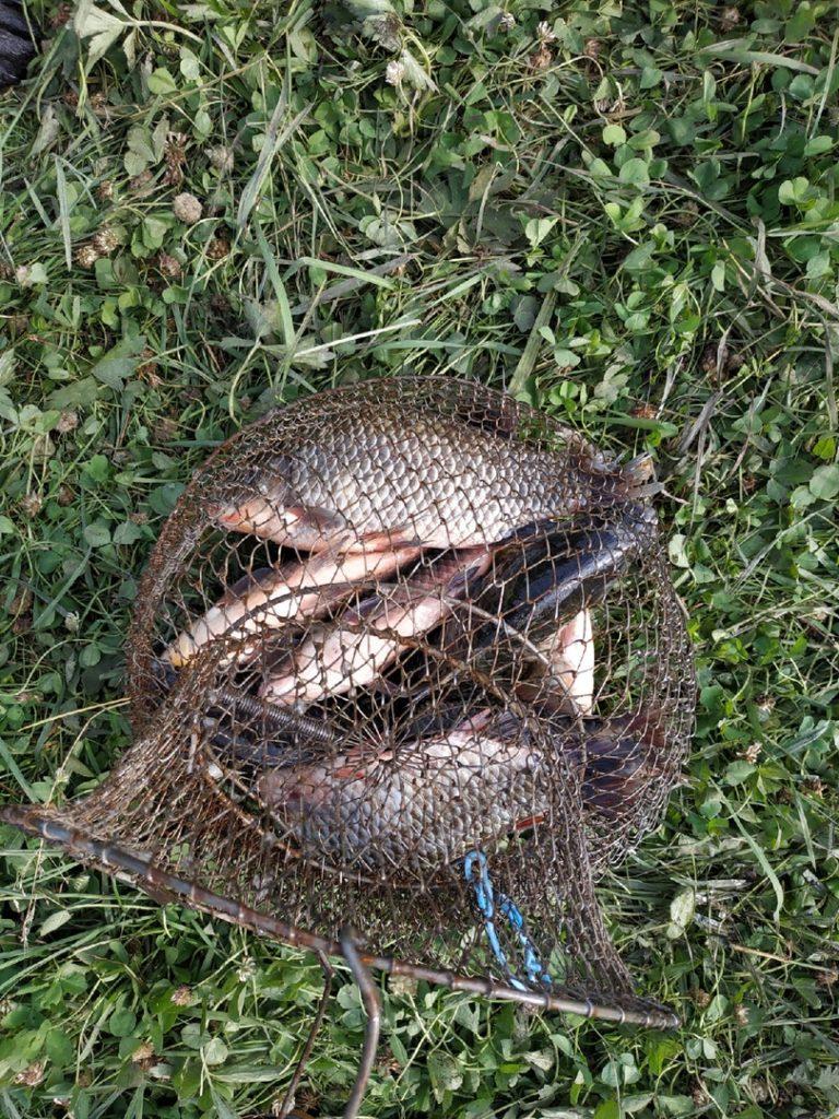 Отчет о рыбалке: Водоём #242570311 — Кирсановский район — посёлок Северный — Центральный федеральный округ, Тамбовская область