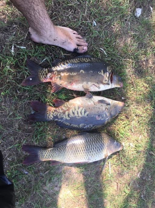Отчет о рыбалке: Водоём #352875611 — Токарёвский район — Центральный федеральный округ, Тамбовская область