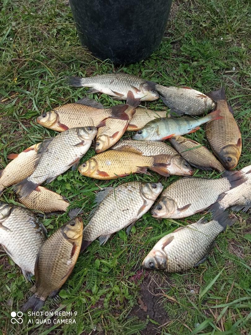 Отчет о рыбалке: Пруд Барский — Иссинский район — Приволжский федеральный округ, Пензенская область
