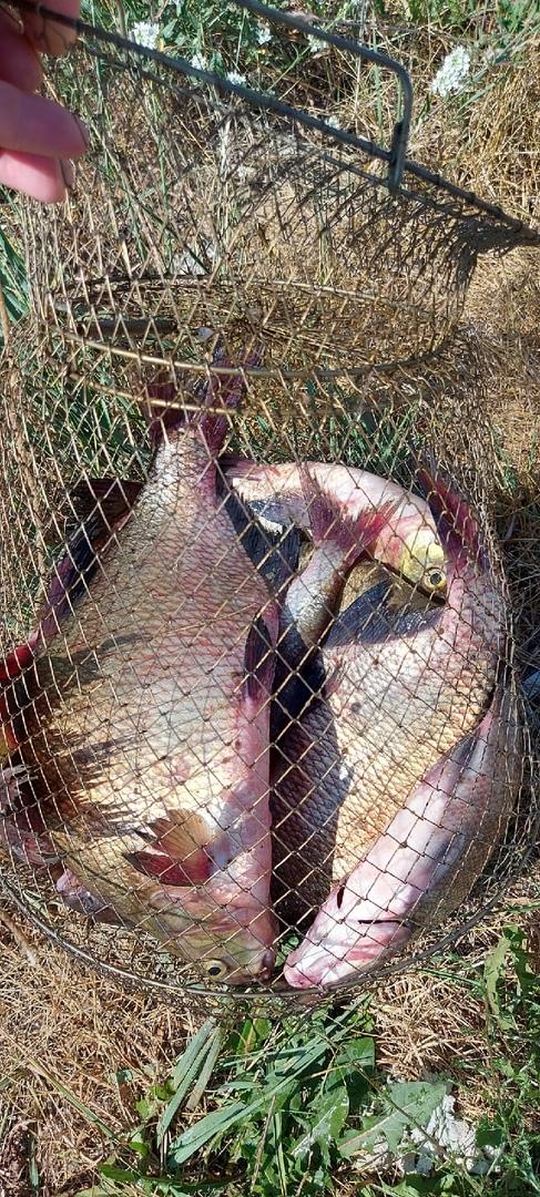 Отчет о рыбалке: Водоём #1631352 — городской округ Дзержинск — Дзержинск — Приволжский федеральный округ, Нижегородская область