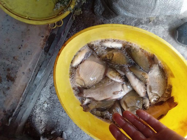Отчет о рыбалке: Водоём #107437314 — городской округ Котовск — Котовск — Центральный федеральный округ, Тамбовская область
