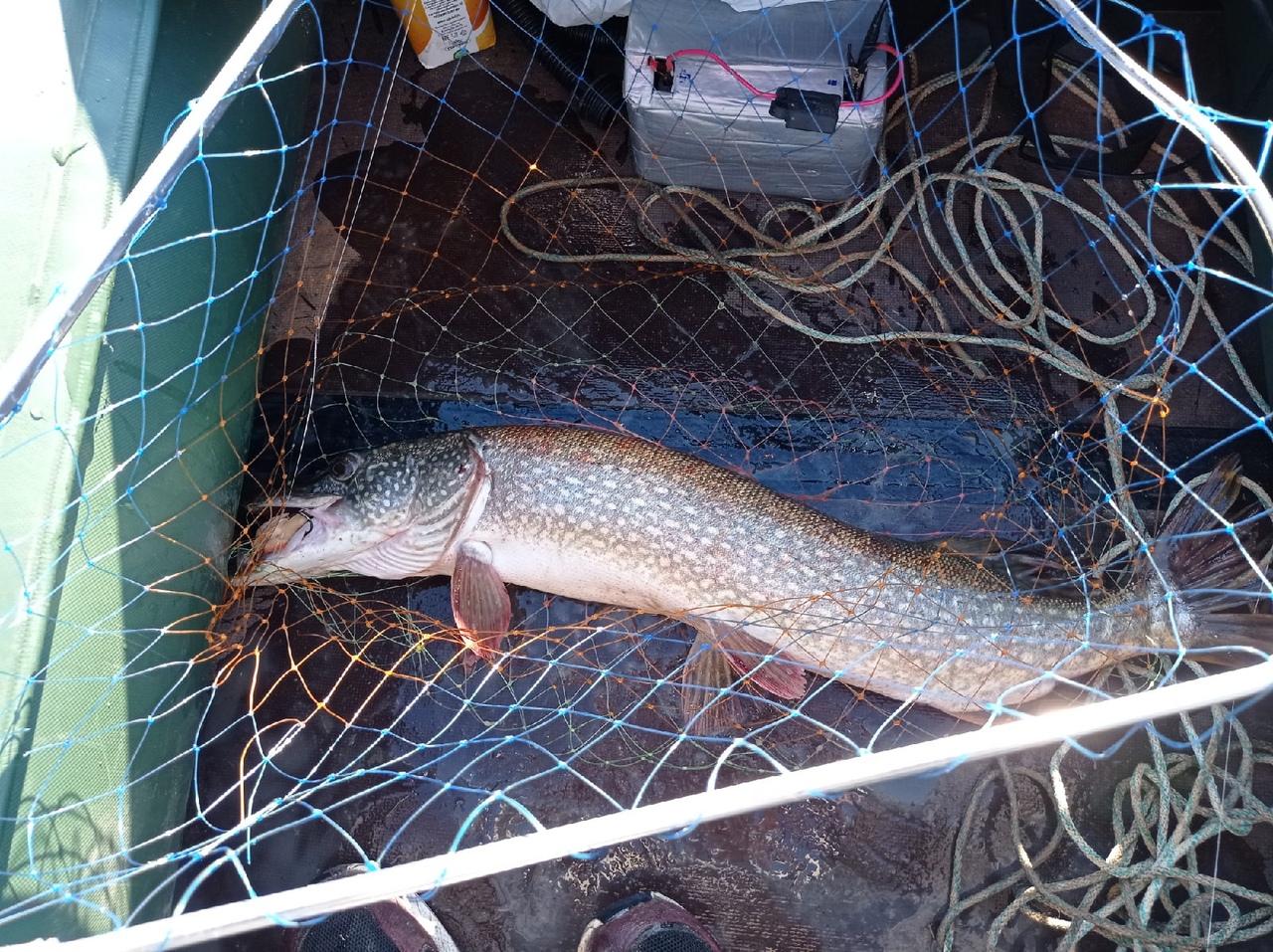 Отчет о рыбалке: Истринское водохранилище — Центральный федеральный округ, Московская область