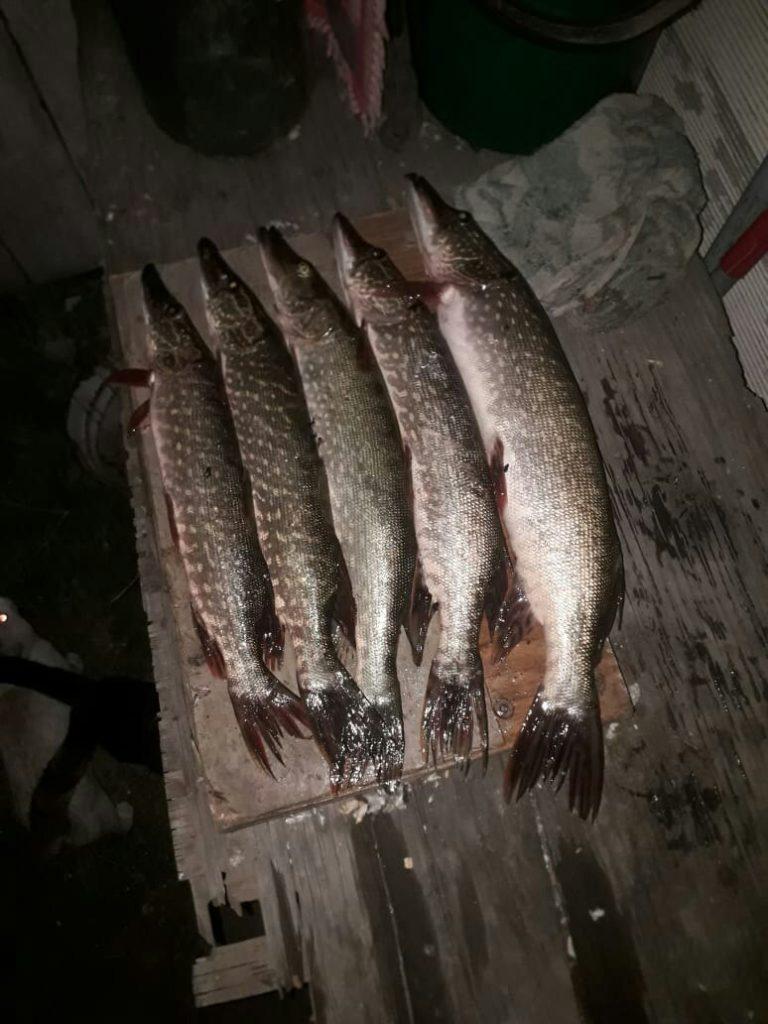 Отчет о рыбалке: река Кокпекты — Восточно-Казахстанская область