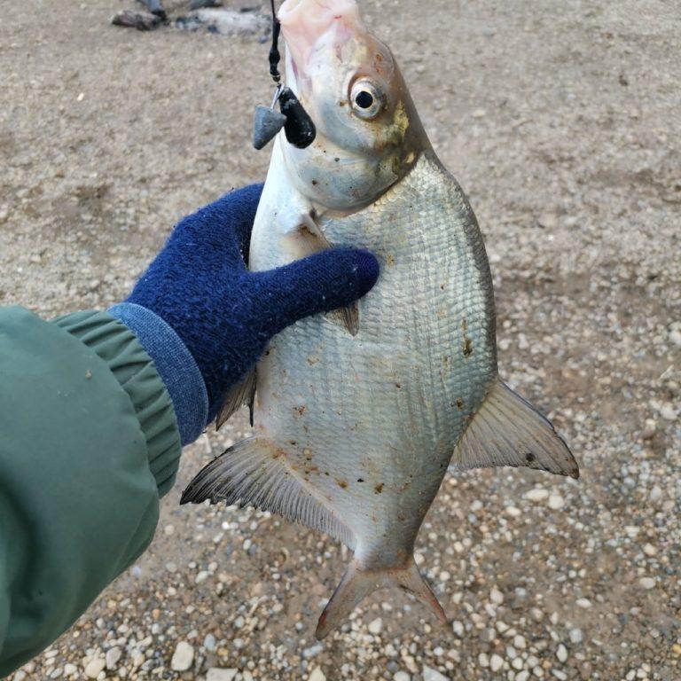 Отчет о рыбалке: Река Тура — Тюменский район — Уральский федеральный округ, Тюменская область