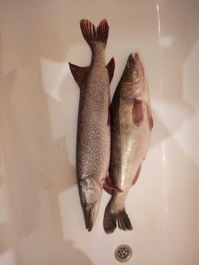 Отчет о рыбалке: Река Волга — Ильинское сельское поселение — Приволжский федеральный округ, Чувашская Республика