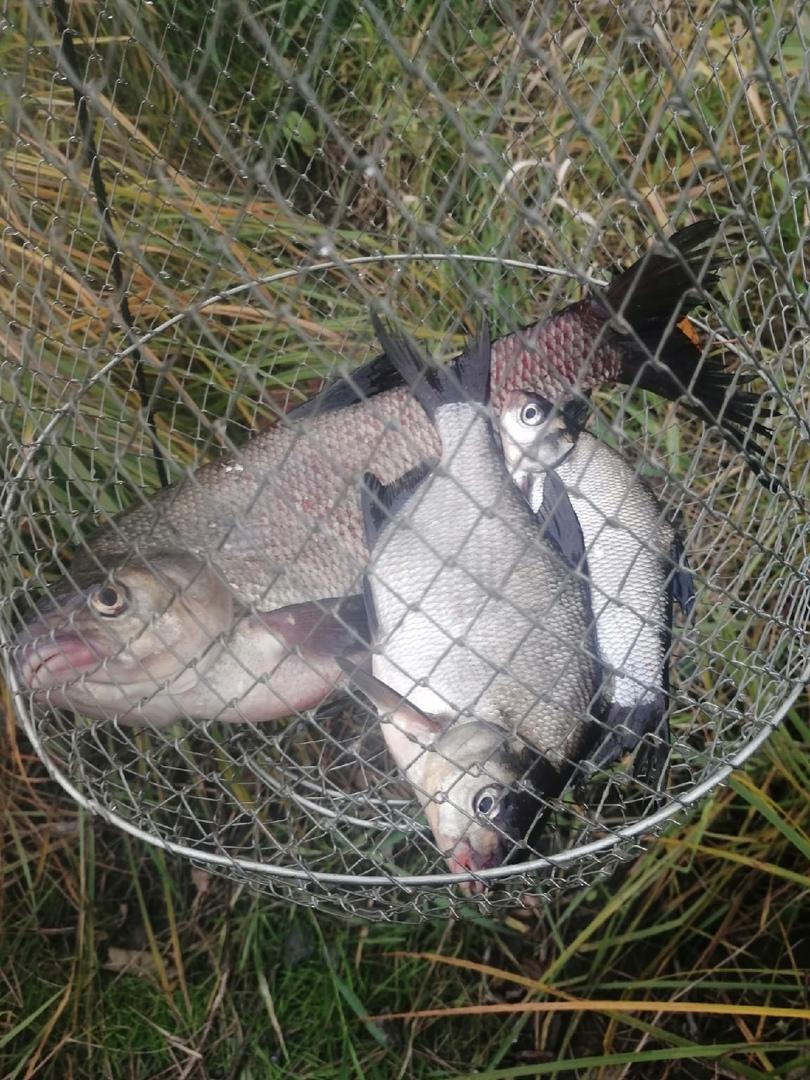 Отчет о рыбалке: Река Шуя — Шуйское сельское поселение — Северо-Западный федеральный округ, Республика Карелия