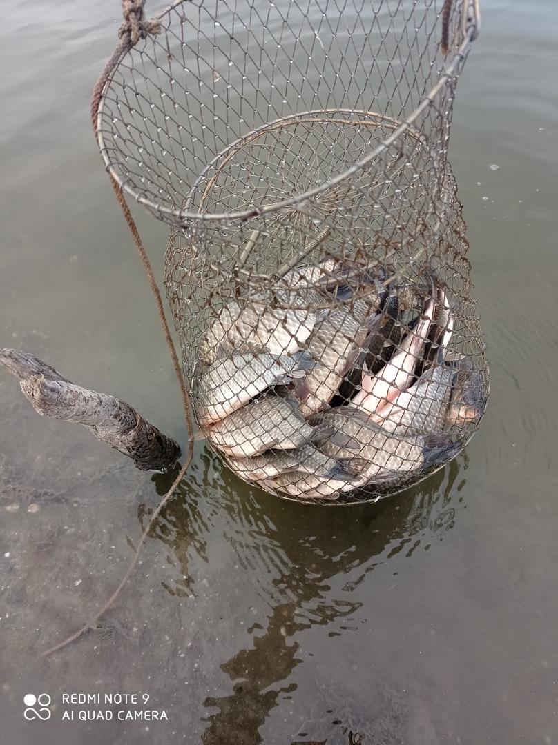 Отчет о рыбалке: старица Старый Ишимчик — городской округ Ишим — Ишим — Уральский федеральный округ, Тюменская область