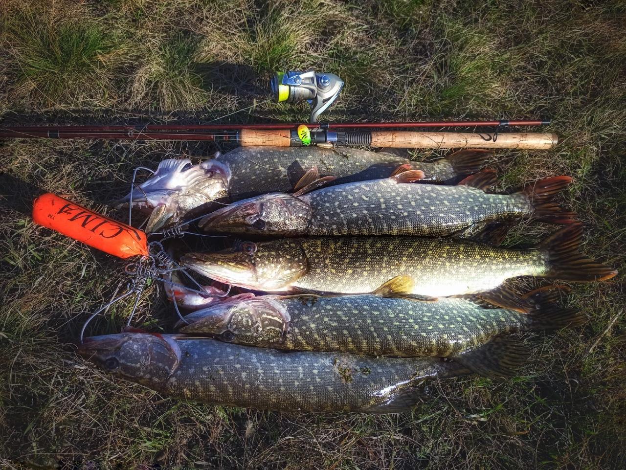 Отчет о рыбалке: Водоём #347675196 — Уваровский район — Центральный федеральный округ, Тамбовская область