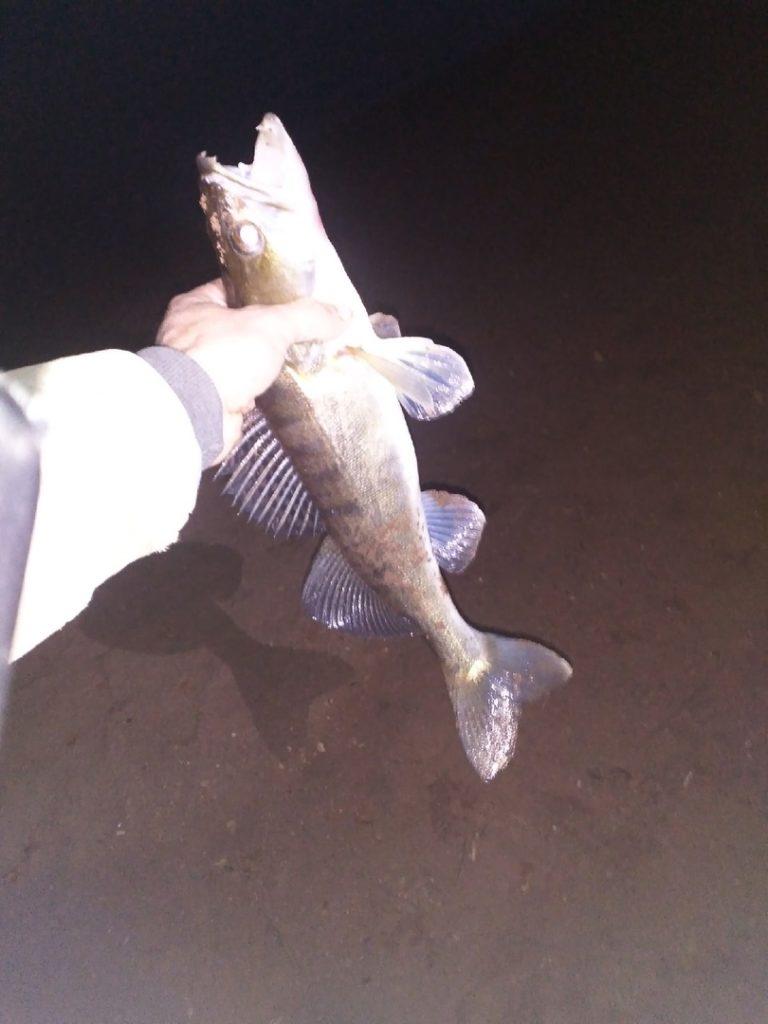 Отчет о рыбалке: Воткинское водохранилище — Приволжский федеральный округ, Пермский край